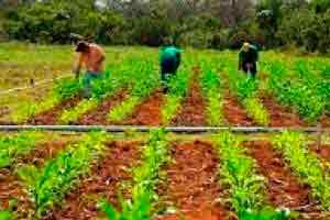Auxiliar em Agropecuária