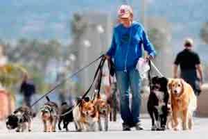 Dog Walker Profissional