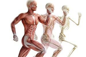 Básico de Anatomia Locomotora
