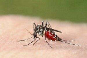 Combate a Dengue, Zika e Chikungunya