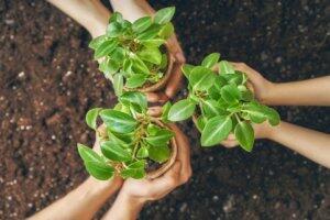 Introdução à Gestão do Meio Ambiente: Sustentabilidade e Educação Ambiental